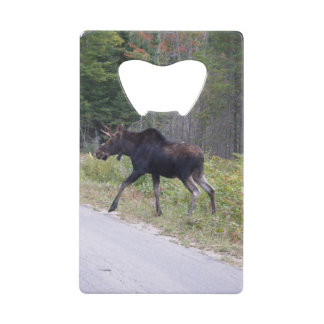 Young Moose About to Cross Road Wallet Bottle Opener
