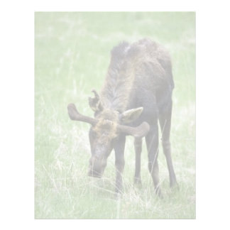 Young moose eating grass letterhead