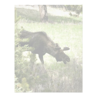 Young moose walking letterhead