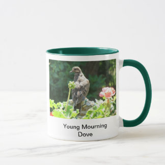 Young Mourning dove Mug