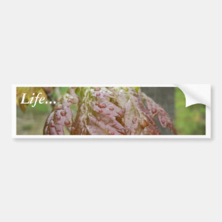 Young Oak Leaves Bumper Sticker