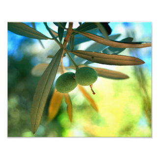Young Olive On A Branch Photo Print