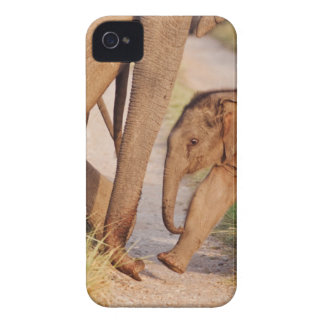 Young one of Indian Asian Elephant Case-Mate iPhone 4 Cases