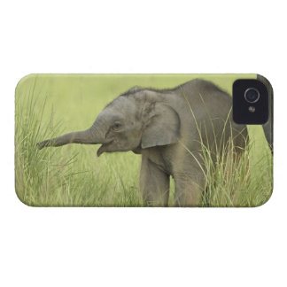 Young one of Indian / Asian Elephant,Corbett Case-Mate iPhone 4 Cases