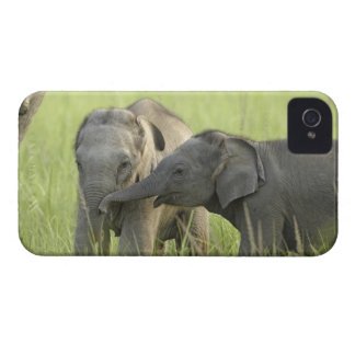 Young ones of Indian / Asian Elephant Case-Mate iPhone 4 Cases