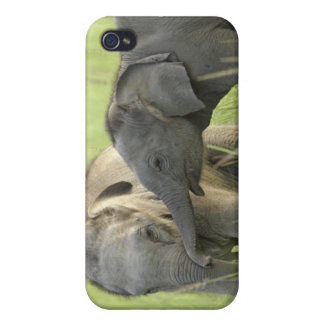 Young ones of Indian / Asian Elephant Cases For iPhone 4