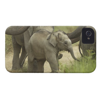 Young ones of Indian / Asian Elephant on the iPhone 4 Case-Mate Cases
