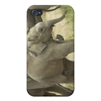 Young ones of Indian / Asian Elephant on the iPhone 4 Cases