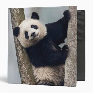 Young Panda climbing a tree, China 3 Ring Binders