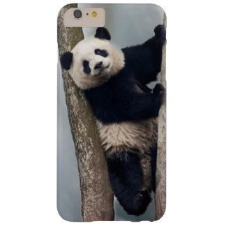 Young Panda climbing a tree, China Barely There iPhone 6 Plus Case