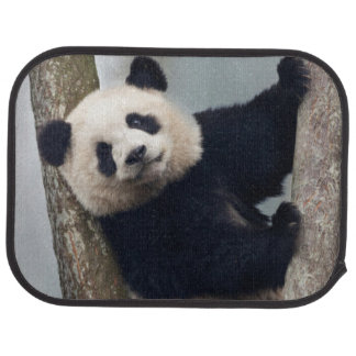 Young Panda climbing a tree, China Car Carpet