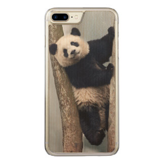 Young Panda climbing a tree, China Carved iPhone 7 Plus Case