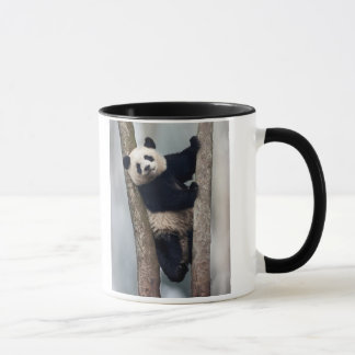 Young Panda climbing a tree, China Mug
