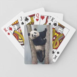 Young Panda climbing a tree, China Poker Deck