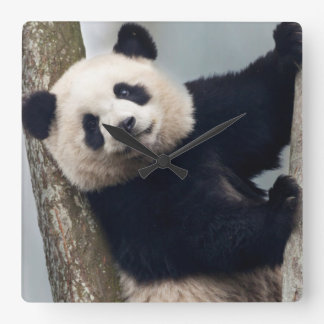 Young Panda climbing a tree, China Wall Clocks
