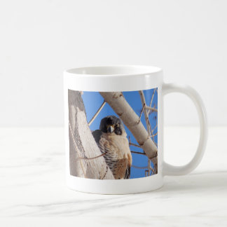 Young Peregrine Coffee Mug