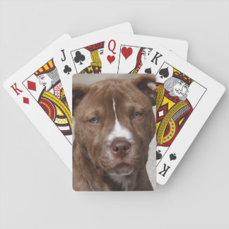 Young Pit Bull Puppy Playing Cards