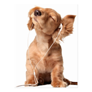 Young Puppy Listening to Music on Headphones Postcard