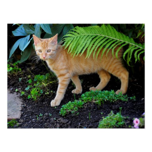 young red domestic cat in the garden, print