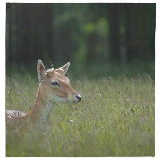Young Richmond Park deer Napkins