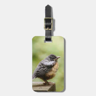 Young Robin Luggage Tag