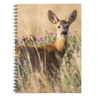 Young Roe Deer in Meadow Notebook