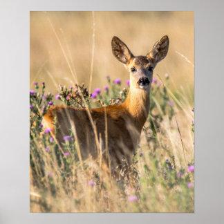 Young Roe Deer in Meadow Poster