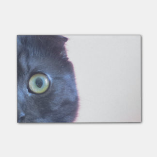 Young Scottish Fold Munchkin Face Post-it Notes