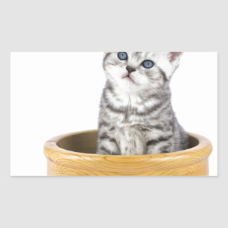 Young silver tabby cat sitting in wooden bowl