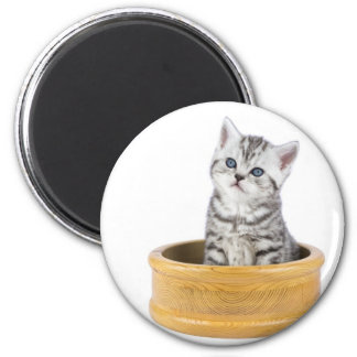 Young silver tabby cat sitting in wooden bowl 2 inch round magnet