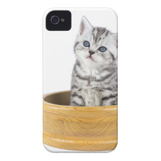 Young silver tabby cat sitting in wooden bowl Case-Mate iPhone 4 case