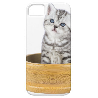 Young silver tabby cat sitting in wooden bowl iPhone 5 covers