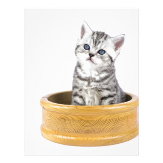 Young silver tabby cat sitting in wooden bowl letterhead