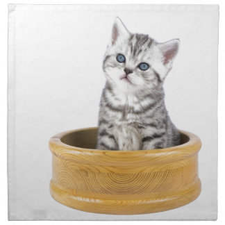 Young silver tabby cat sitting in wooden bowl napkin