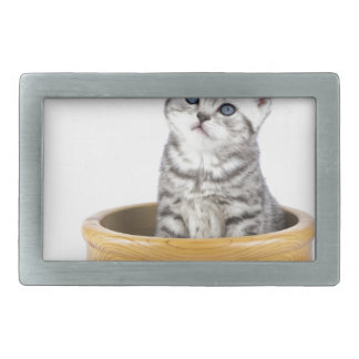 Young silver tabby cat sitting in wooden bowl rectangular belt buckle