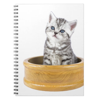 Young silver tabby cat sitting in wooden bowl spiral note book