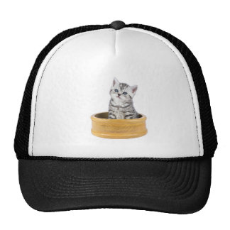 Young silver tabby cat sitting in wooden bowl trucker hat