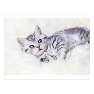 Young silver tabby spotted cat lying on sheep skin postcard