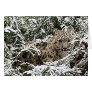 Young Snow Leopard Card