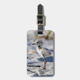 Young Snowy Plovers (Charadrius alexandrinus) Luggage Tag