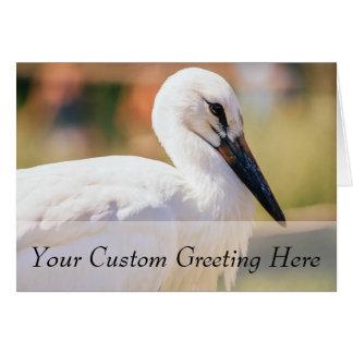 Young Stork Bird, Animal Portrait Photograph Card