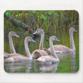 Young Swan Family Mouse Pad