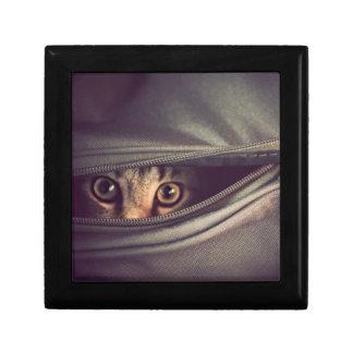 Young Tabby Kitten Gift Box