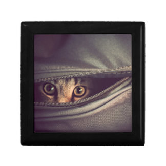 Young Tabby Kitten Looking Out From Zip Up Bag Gift Box