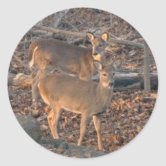 Young Whitetail Deer Series Round Sticker
