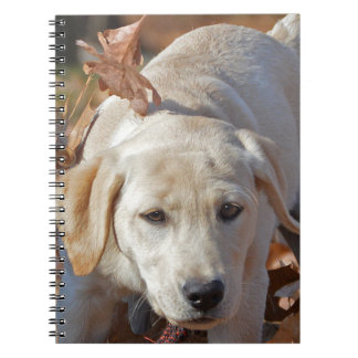 Young Yellow Labrador Retriever Puppy Notebook
