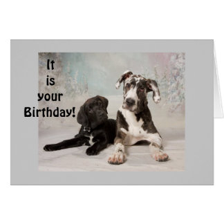 YOUR BIRTHDAY IS HERE - ENJOY CARD