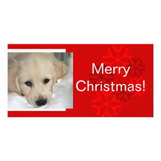 Your Dog Photo Snowflake Christmas Card Photo Card Template