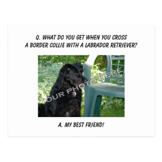 Your Photo Here! My Best Friend Border Collie Mix Postcard