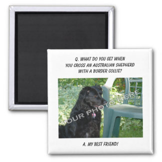 Your Photo! My Best Friend Australian Shepherd Mix Square Magnet